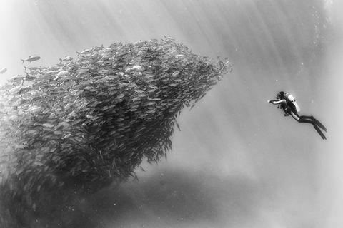Für mehr Aufmerksamkeit: Fotograf begibt sich in gigantische Fischschwärme