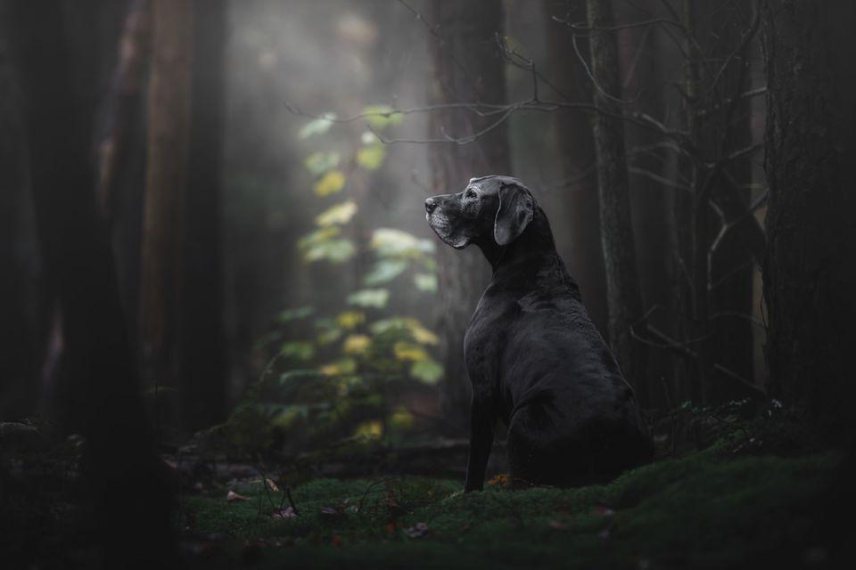 Monica van der Maden /Dog Photographer of the Year 2018