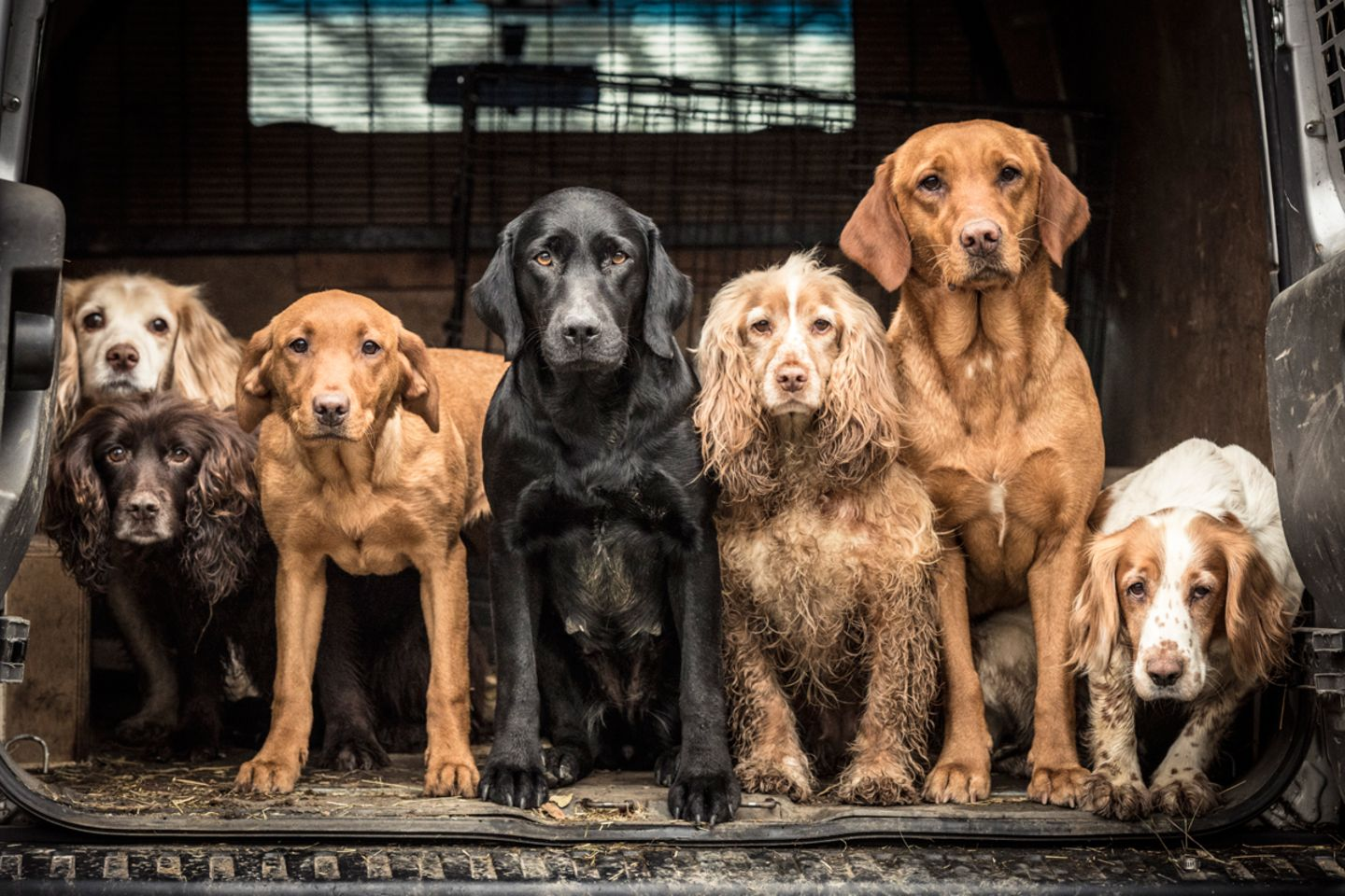 Tracy Kidd/Dog Photographer of the Year 2018
