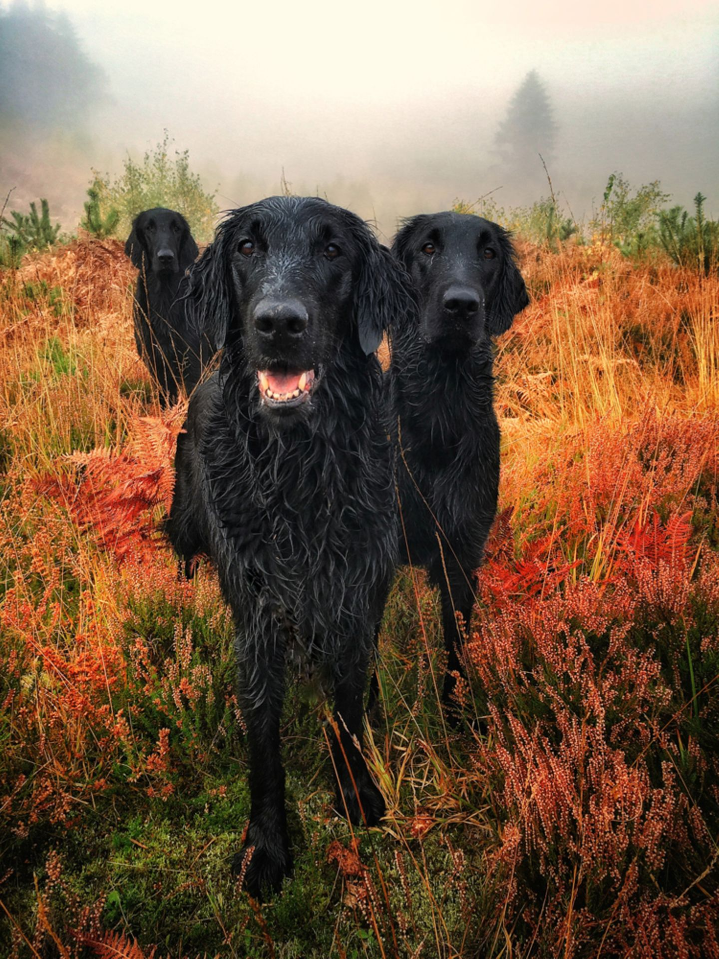 Carol Durrant/the Dog Photographer of the Year 2018