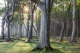Gespensterwald an der Ostsee bei Nienhagen