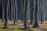 Gespensterwald Ostsee