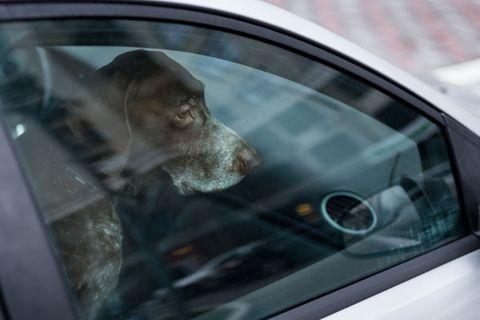 Hund allein im Auto