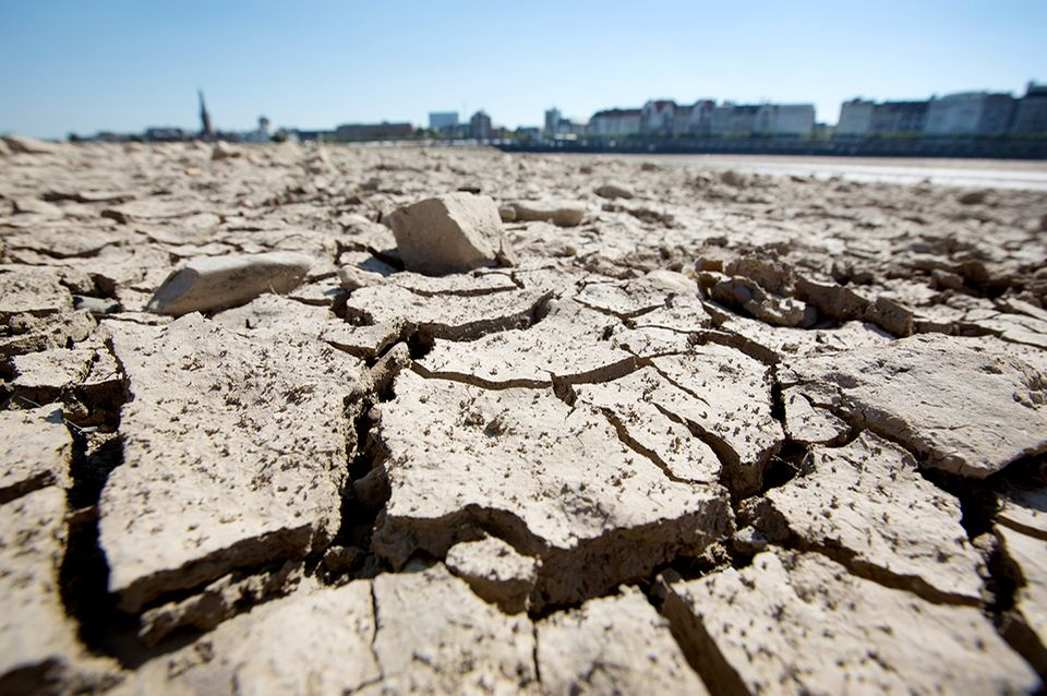 Düsseldorf: Am Ufer des Rheins sind durch die anhaltende Trockenheit Risse entstanden.