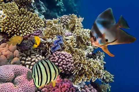 Fische im Ozean