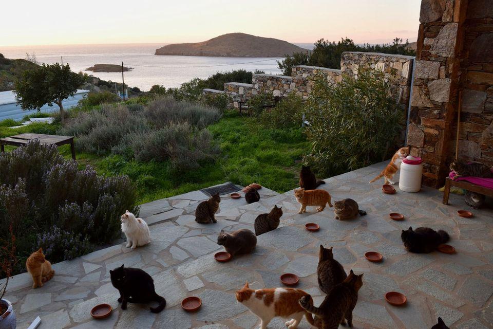 Katzen auf der Insel Syros