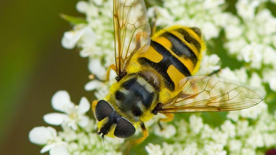 """Kolumne """"Alles im grünen Bereich"""": Was an den Wespen diesen Sommer wirklich nervt"""
