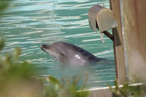 Delfin Honey
