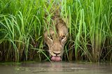 Isak Pretorius/Wildlife Photographer of the Year