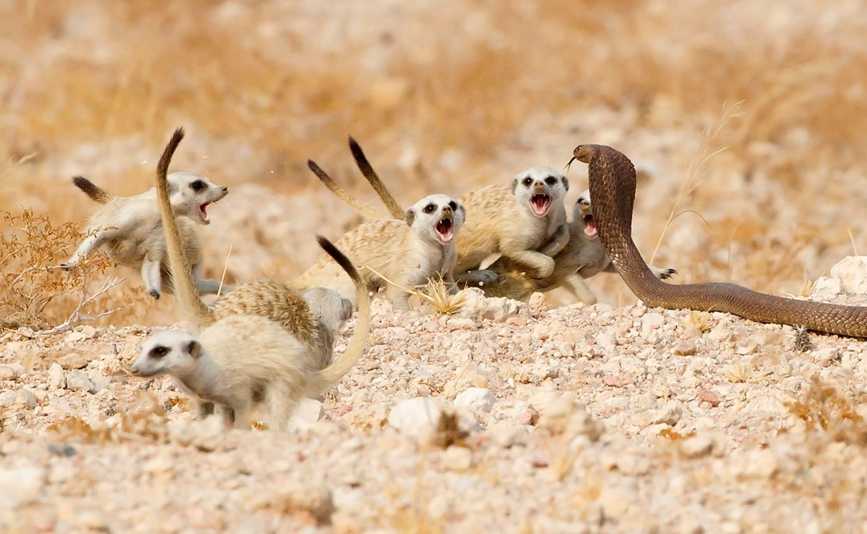 Foto: Tertius A Gous/Wildlife Photographer of the Year