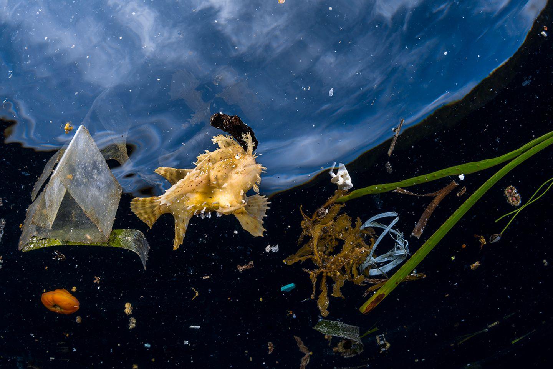 Greg Lecoeur / Wildlife Photographer of the Year