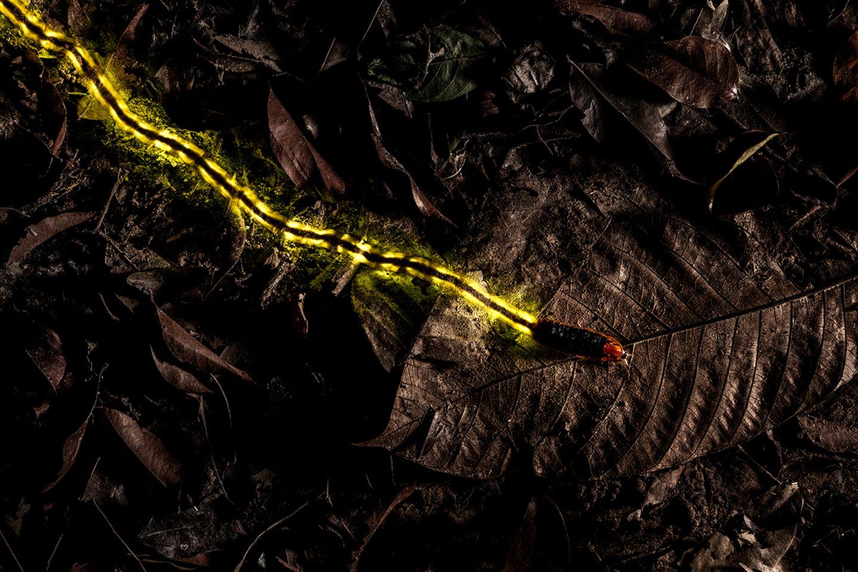 Christian Wappl / Wildlife Photographer of the Year