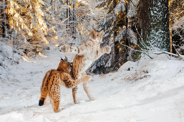 Julius Kramer / Wildlife Photographer of the Year