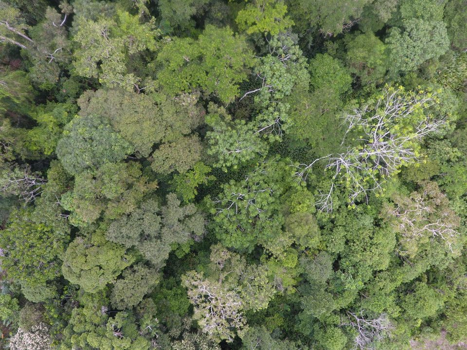 Ecuador: Diese Drohnen-Aufnahme aus 75 Meter Höhe zeigt die Baumvielfalt eines Regenwaldareals in der Nähe von Tena