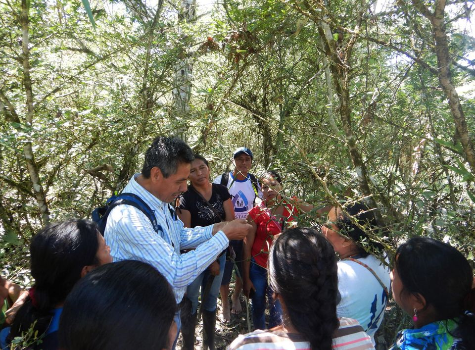 Ecuador: Bereits im Sommer 2018 beginnt ein Agronom mit langjähriger Vanille-Expertise aus Mexiko das Projektteam und die Produzenten weiterzubilden und zu beraten