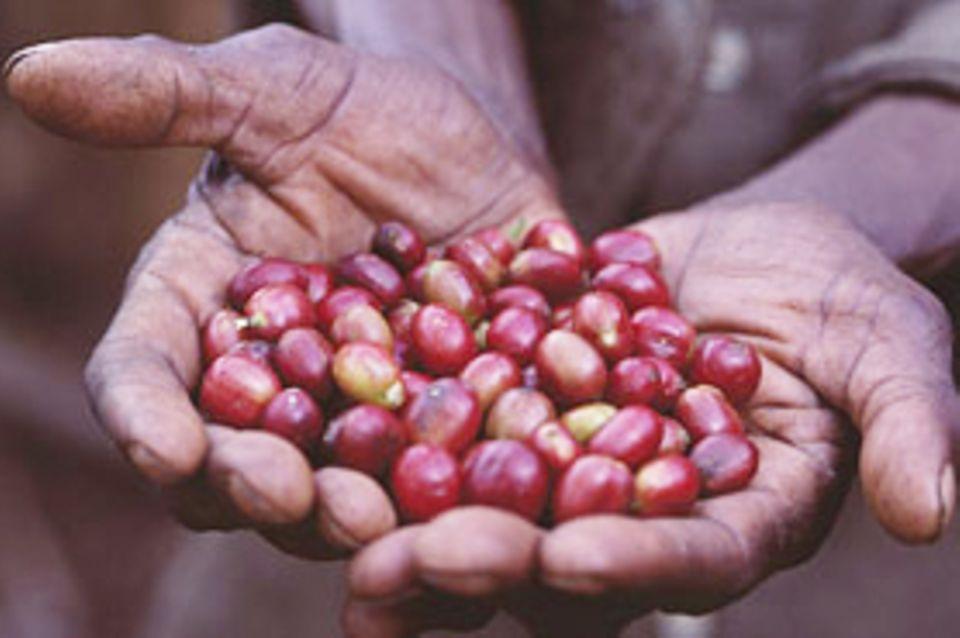 Äthiopien: Rettung für die Kaffeewälder in der Kaffa-Region