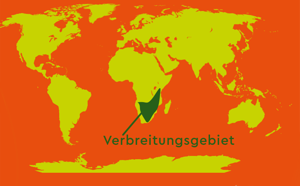 Verbreitungsgenbiet des Ochsenfroschs