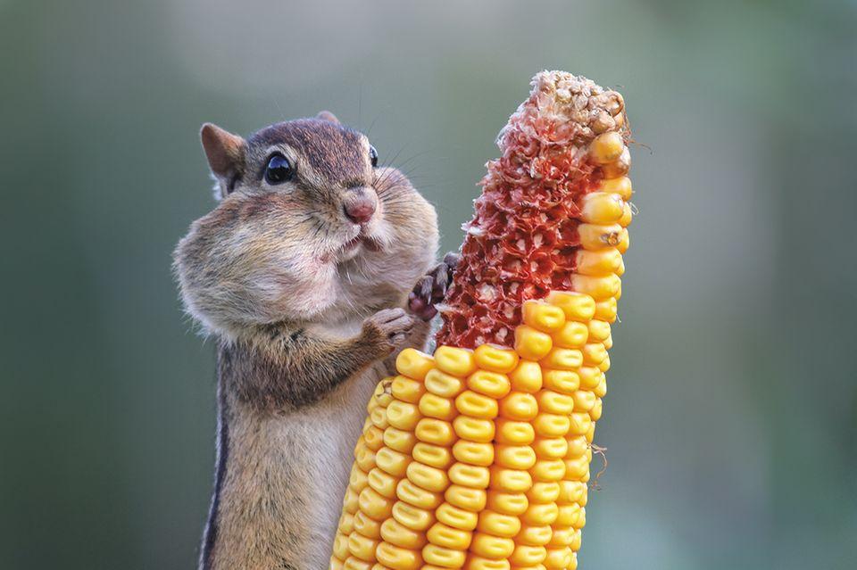Comedy Wildlife Award
