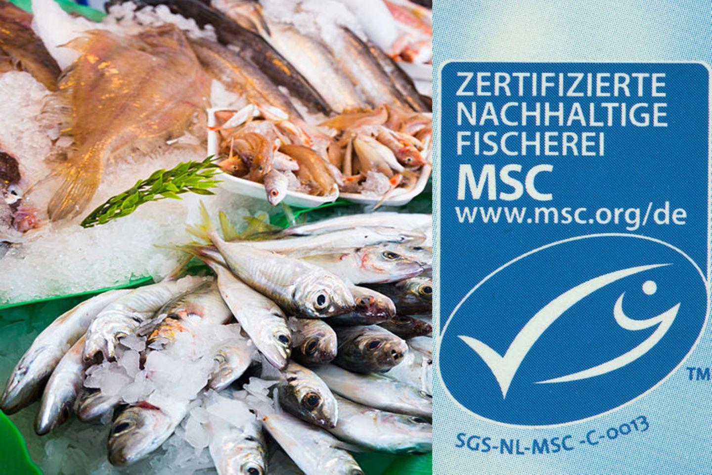 MSC-Siegel