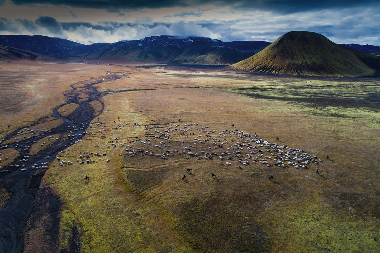 Schafherde im Tal von Helliskvisl