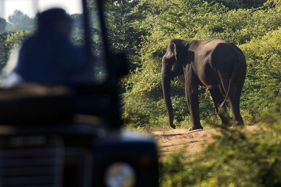 Elefant im Yala Nationalpark