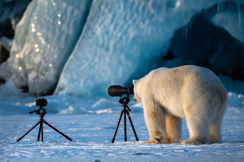Roie Galitz / Comedy Wildlife Photography Awards 2018