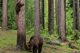 Valtteri Mulkahainen / Comedy Wildlife Photography Awards 2018