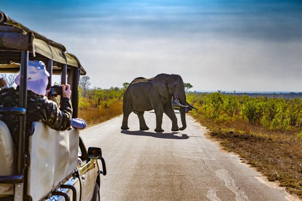 Safari in Südafrika