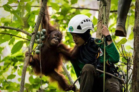 Vier Pfoten Auffangstation, Borneo