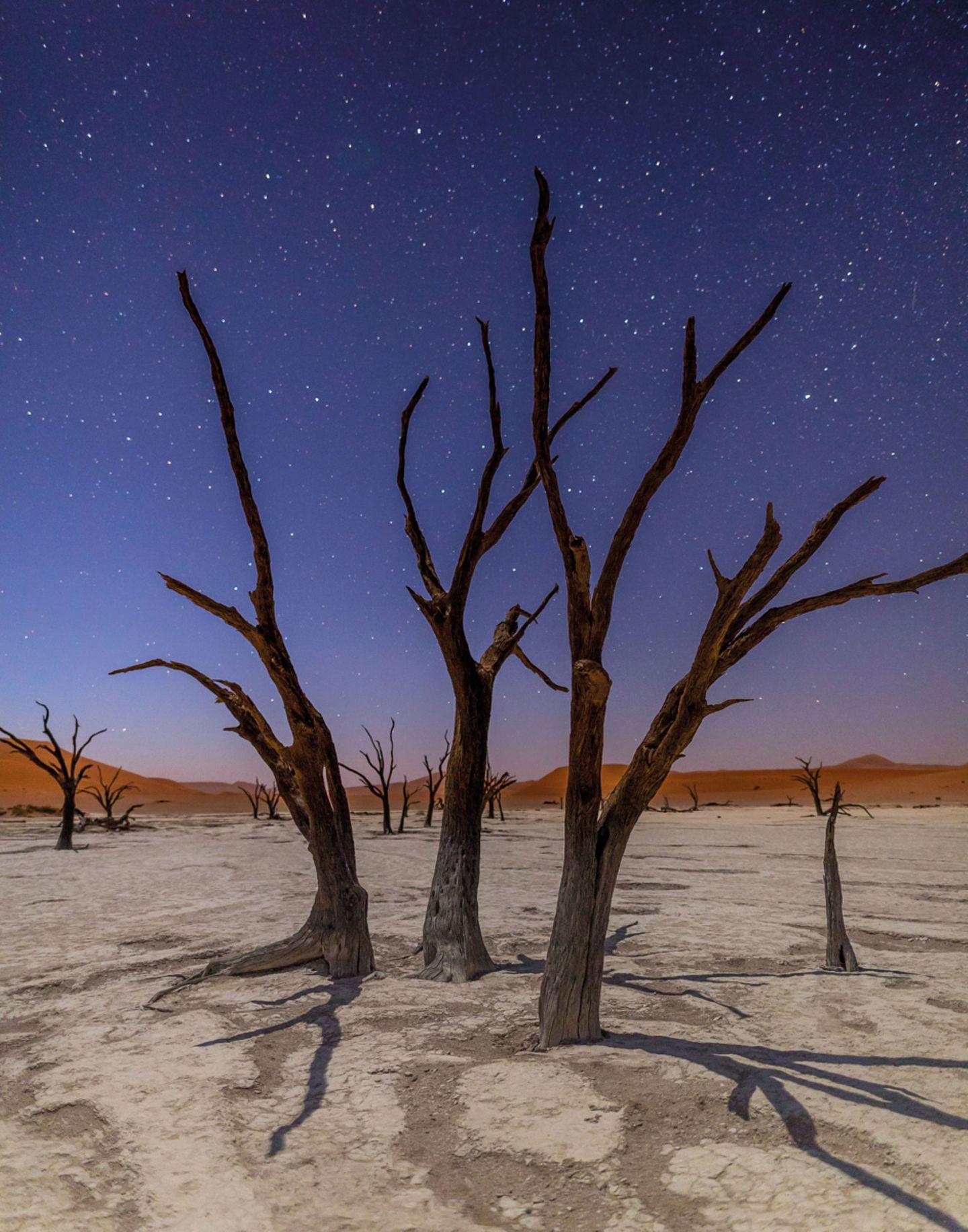 Sterne über versteinerten Kameldornbäumen (Vachellia erioloba), Deadvlei, Namib-Naukluft National Park, Namibia