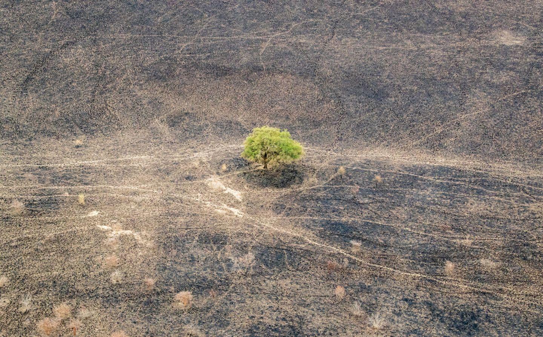 Einsame Akazie (Vachellia sp.), Zakouma National Park, Tschad