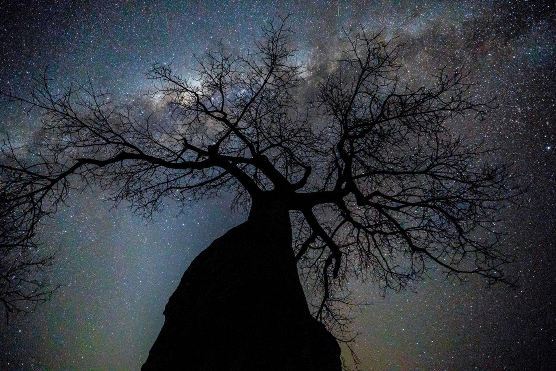 Ein Baobab (Adansonia digitata) streckt sich der Milchstraße entgegen, Mana Pools National Park, Simbabwe