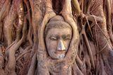 Buddha in einem Banyan (Ficus sp.), Wat Mahathat, Ayutthaya, Thailand