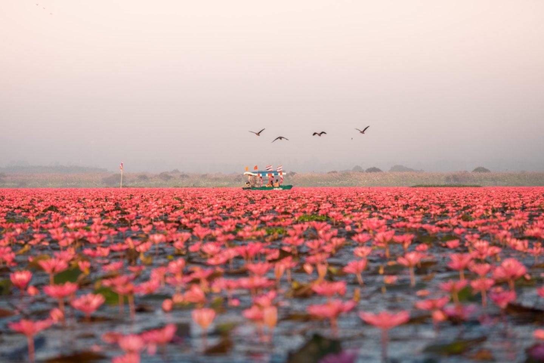 Lotussee
