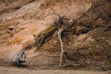 Federico Veronesi /Wildlife Photographer of the Year/Natural History Museum