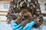 Suzi Eszterhas/Wildlife Photographer of the Year/Natural History Museum