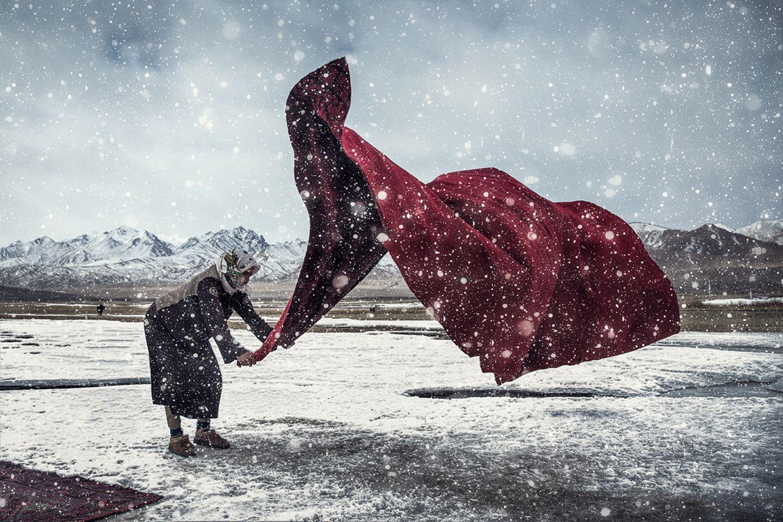 Windwesen im Schneegestöber