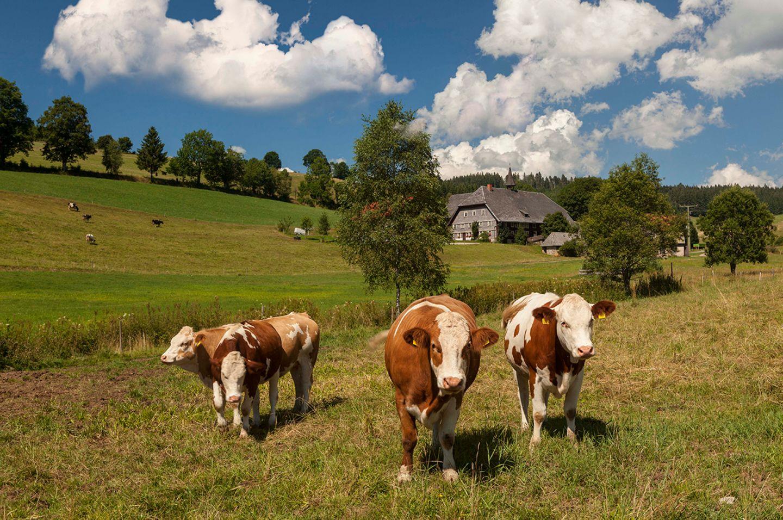 Ein Bauernhof in Deutschland