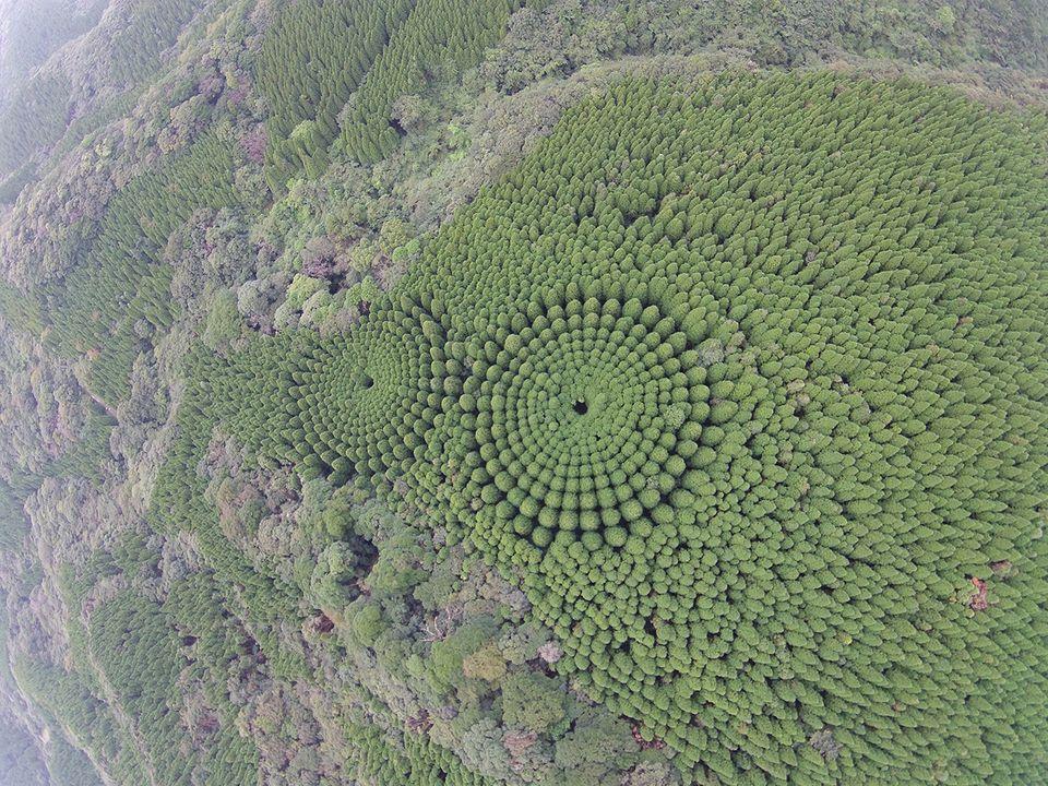 Baumkreise, Japan