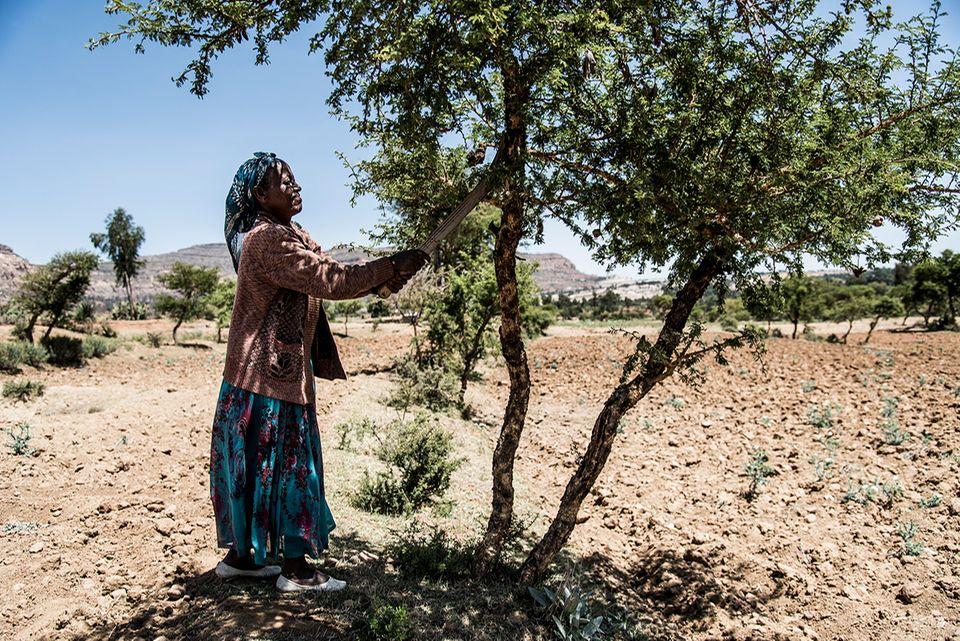 Tony Rinaudo: Mit dem richtigen Beschnitt werden aus den alten Wurzelgeflechten wieder hohe Bäume - auch in der dürren Sahel-Zone