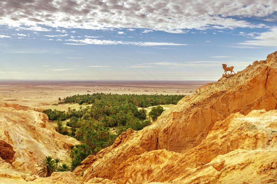 Chebika Oase in Tunesien