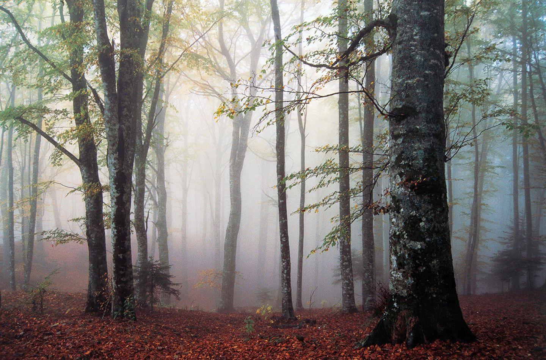 Nationalpark Foreste Casentinesi