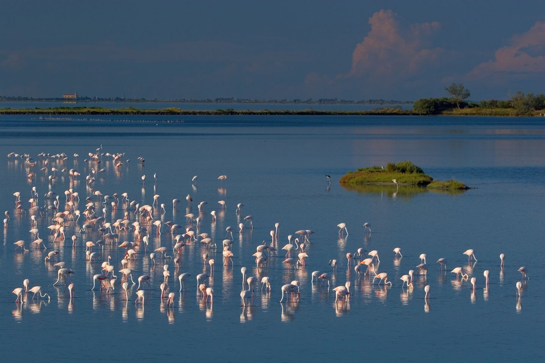 Flamingos, Po Delta