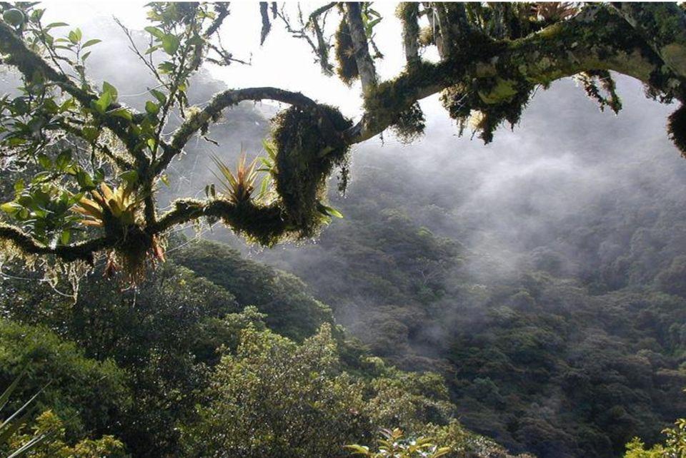 Ecuador: Blick auf das Waldschutzgebiet im Bezirk Cuellaje, Intag