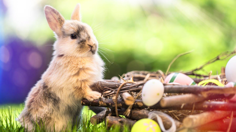 Zum ostermontag grüße Schöne Ostergrüße