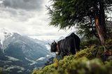 Eringer, Wallis, Schweiz