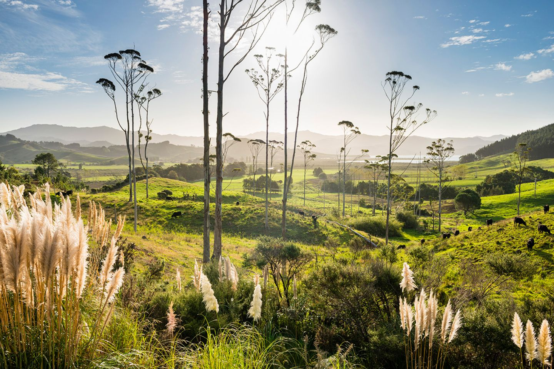 Waikato, Neuseeland