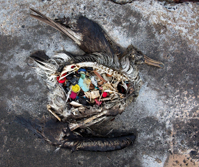 Verendeter Seevogel