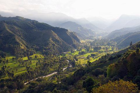 Cocora Valley Salento