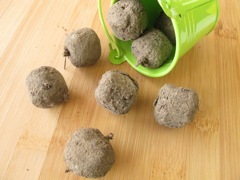 Samenbomben, Seedbombs